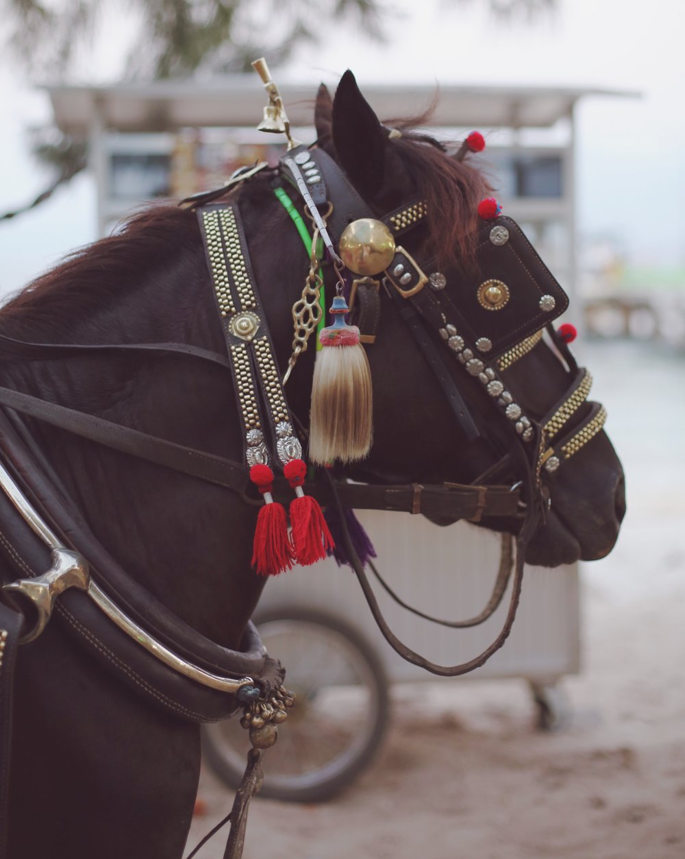 Horse, Gili Islands, Indonesia - Hannah Gabrielle More Travel Photography