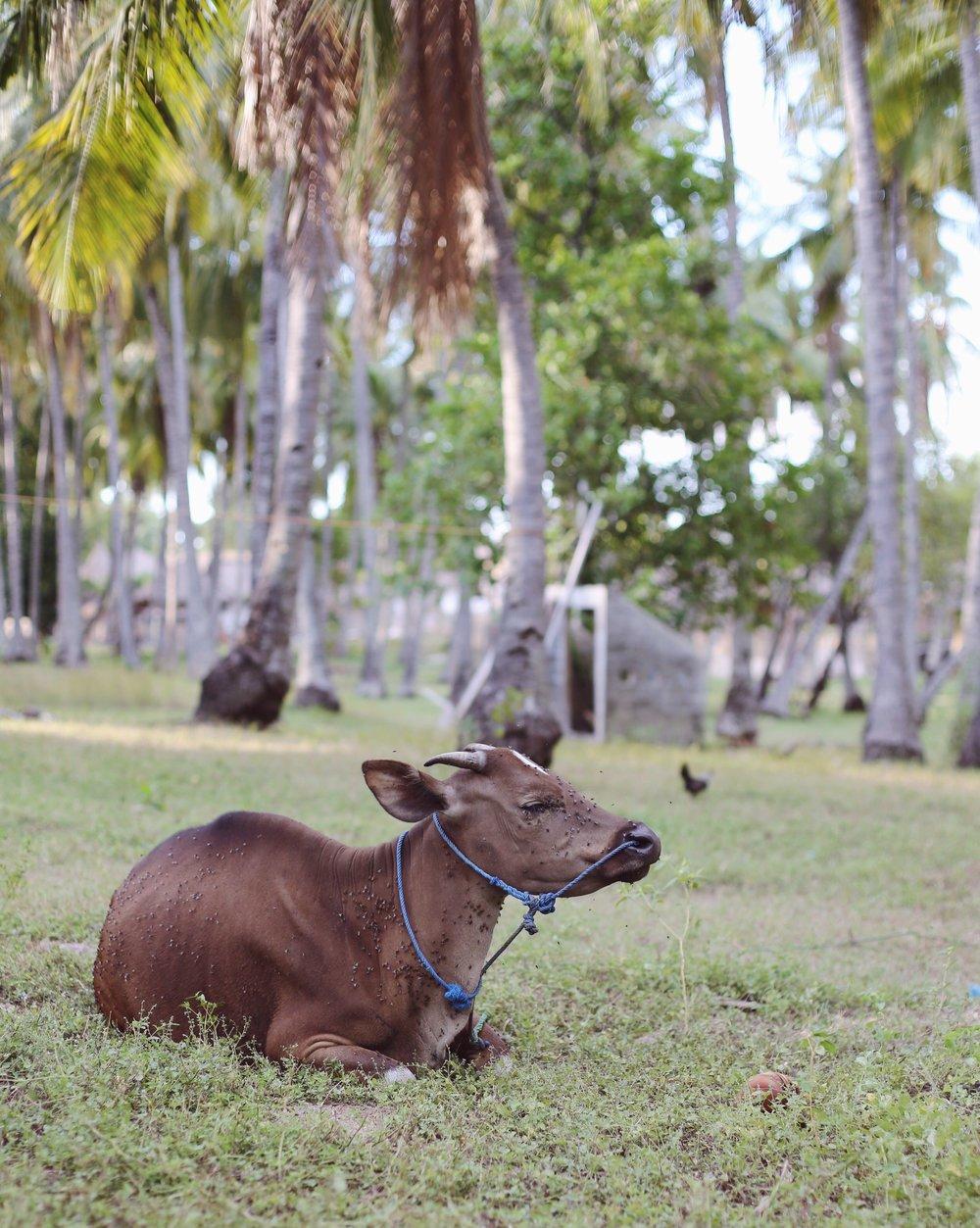 Gili Islands - Hannah Gabrielle More Travel Photography