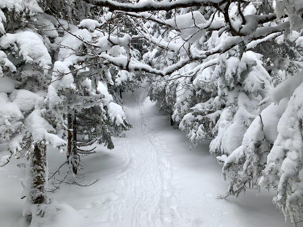 Trail towards Cascade Summit ADK