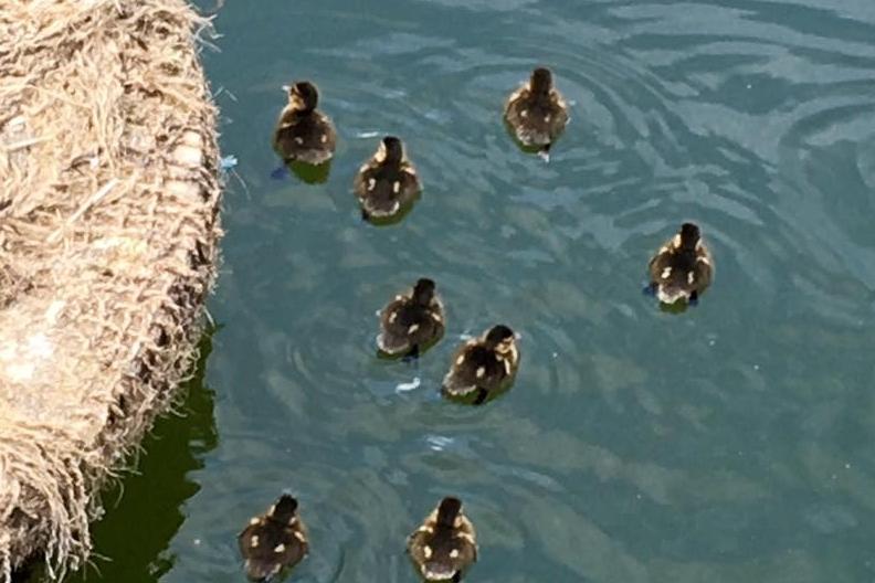 Duck photo.jpg