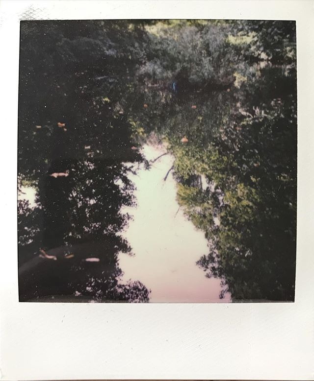 Woodland reflection. #impossibleproject #sx70 #woodland #colourphotography #film #waterlowpark