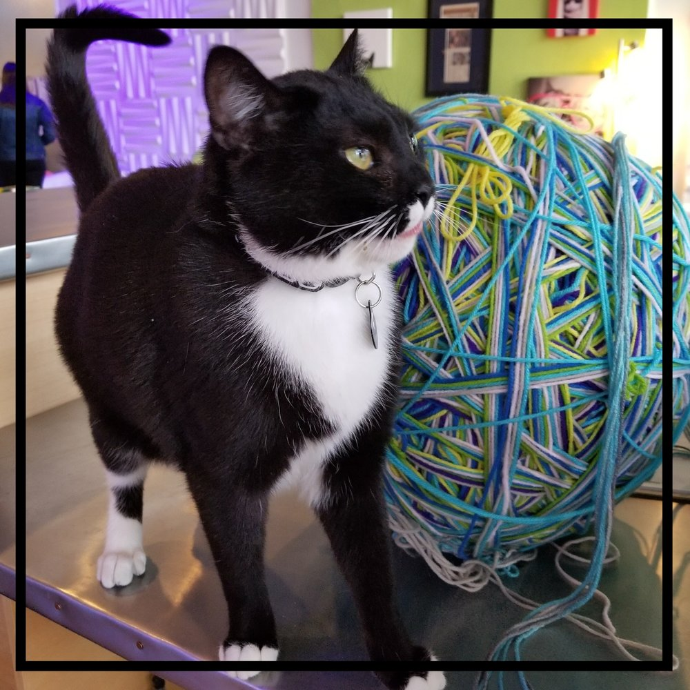 Huh huh uh Hi! - My name is Franklin and I'm the special guest at the Crooked Tail. My tail is also the namesake of the cafe. Won't someone please come play with me?! I'll give you a hug and love you furrever.STATUS: At Home