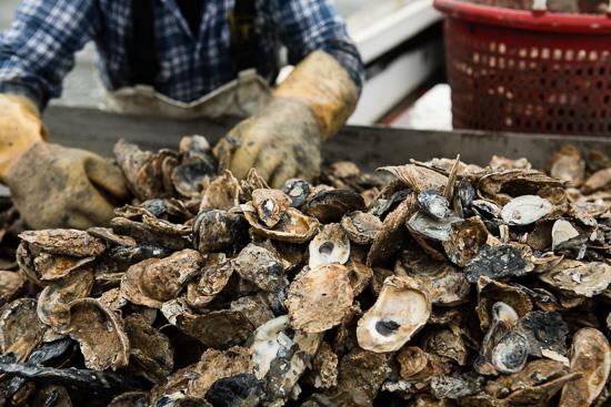 $70 Million for Chesapeake Bay Restoration