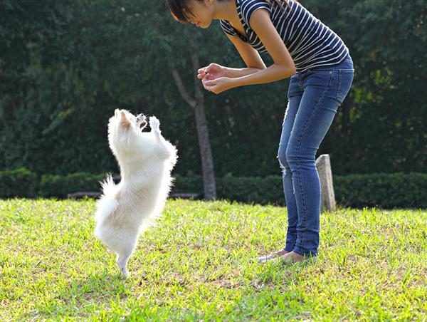 best-pleasanton-dog-walking-areas.jpg