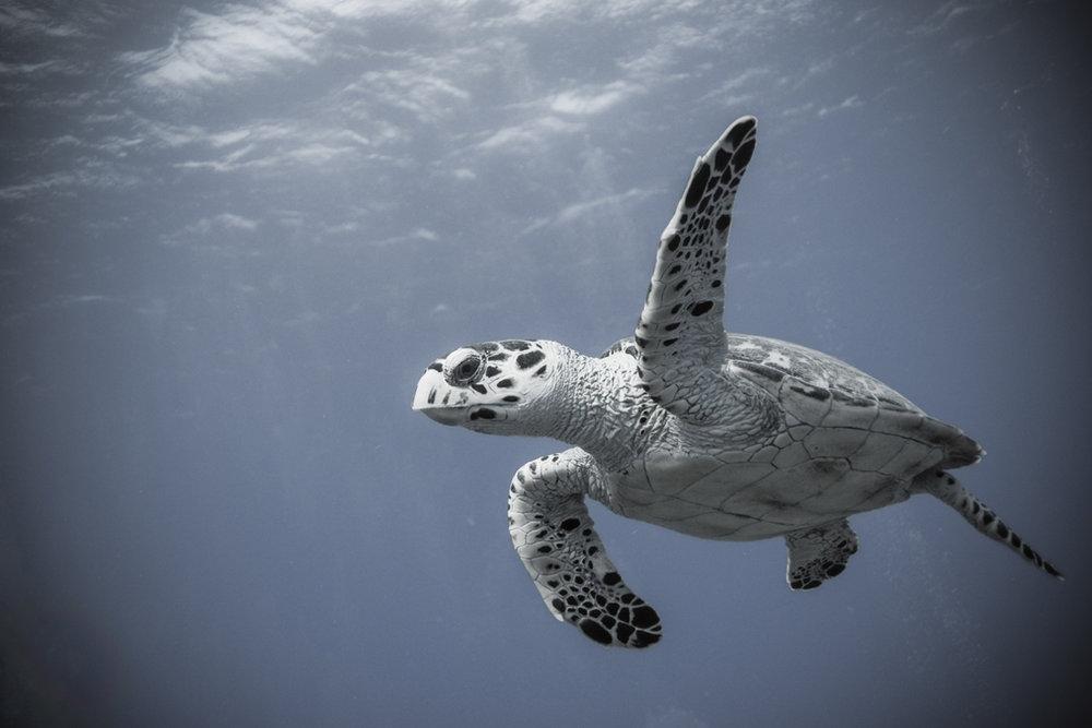 Indigo-Divers-1.jpg