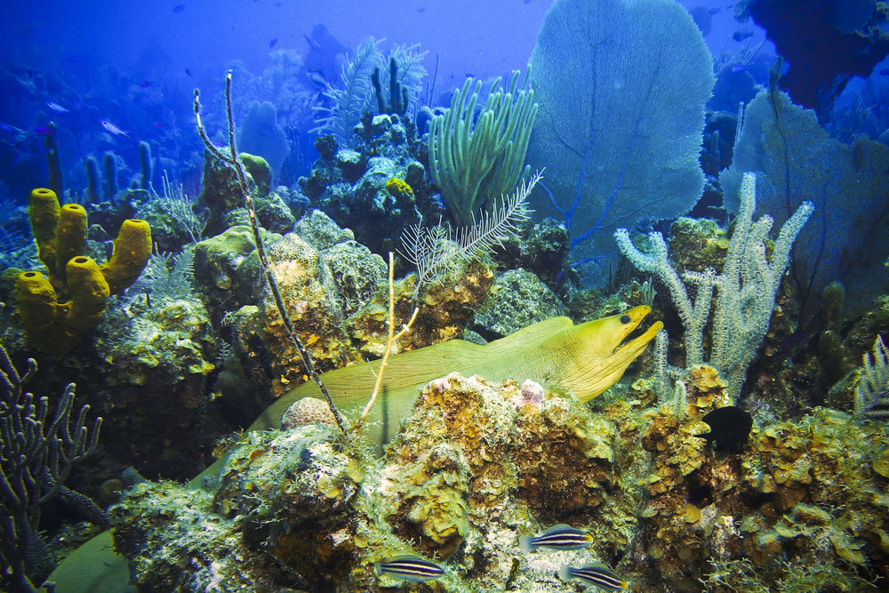 Top_5_Dive_Sites_022.jpg