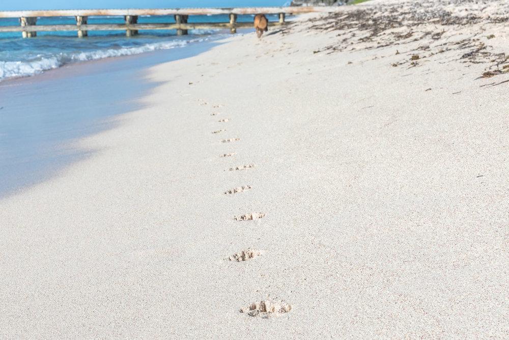 Spotts-Beach-5.jpg