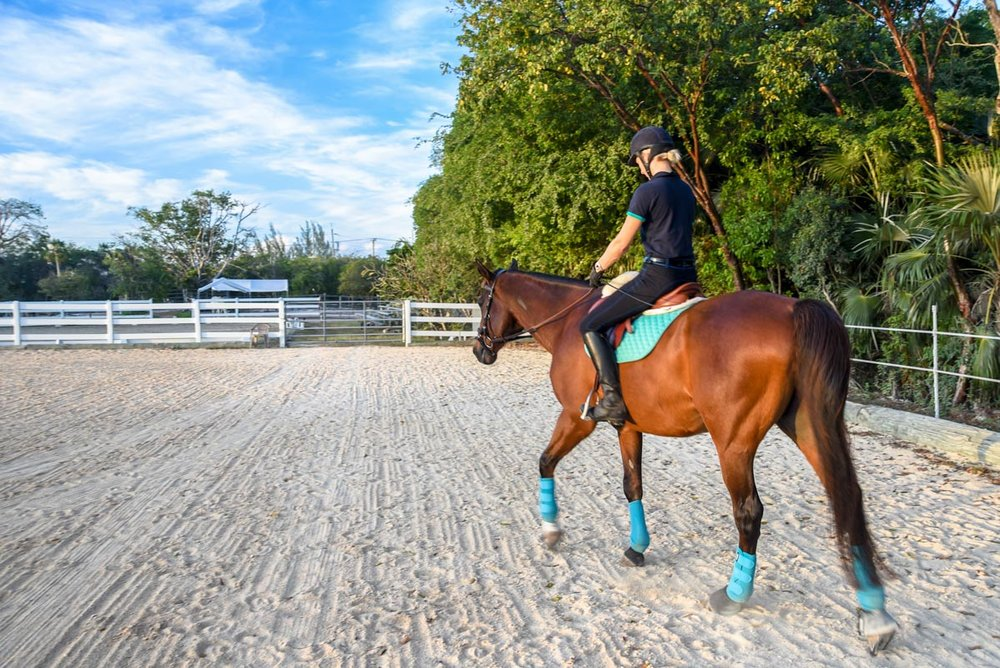 Equestrian-Centre-4.jpg