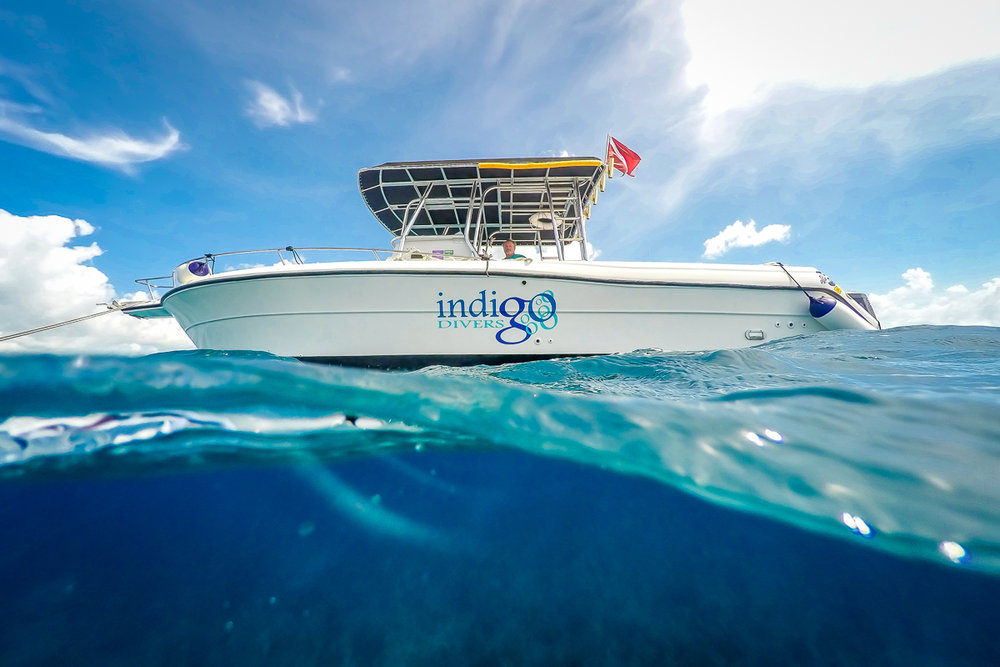 INDIGO-1.jpg
