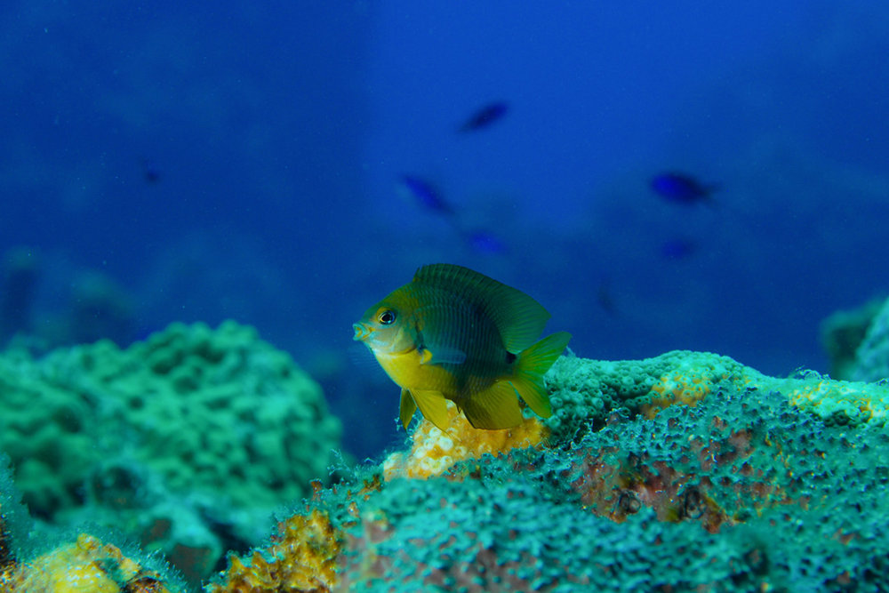 Indigo-Divers-2.jpg