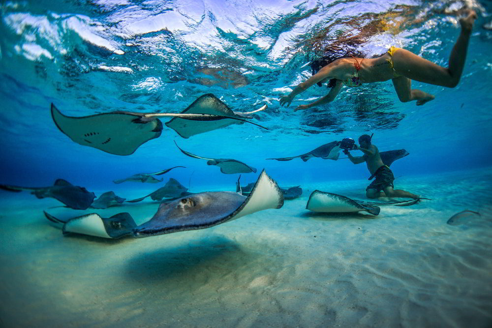Stingray City - A MARINE LIFE EXPERIENCE