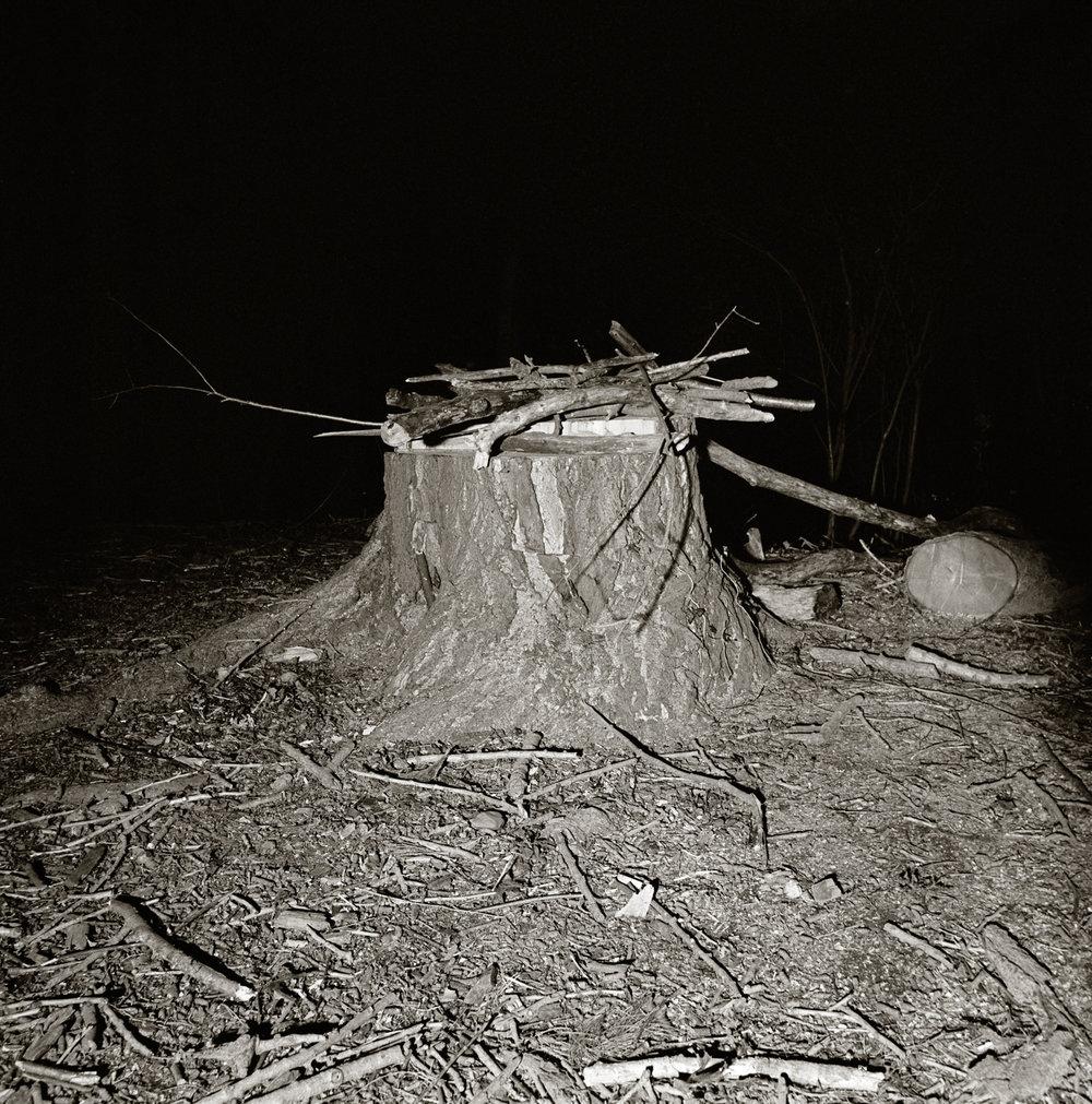 PROSPECT TREES 2.jpg