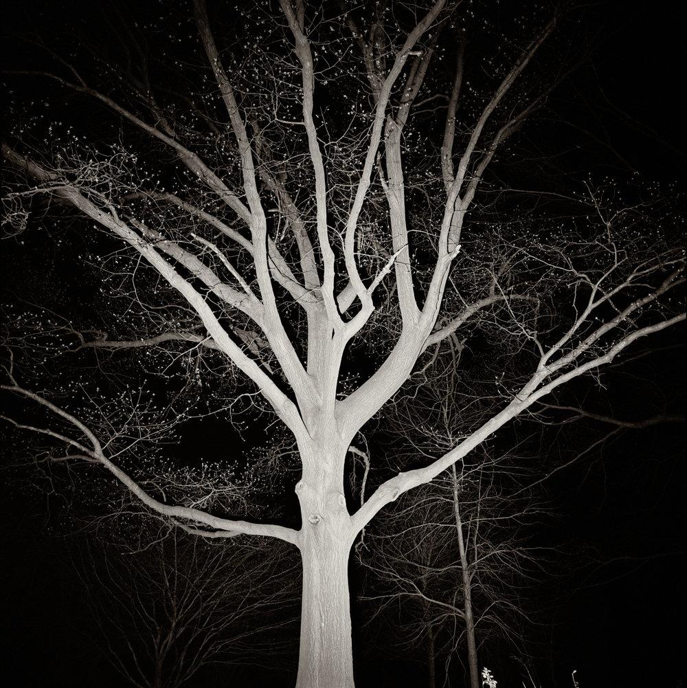 PROSPECT TREES 6.jpg