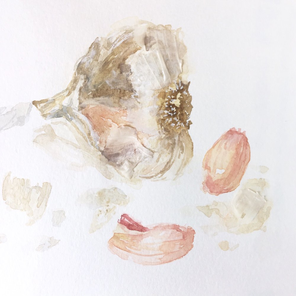 Watercolor Garlic