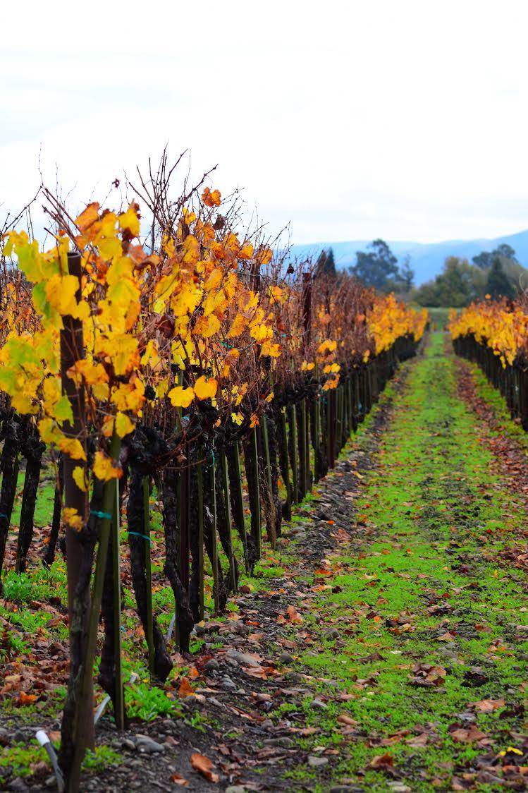 Sonoma Wine Country.jpg