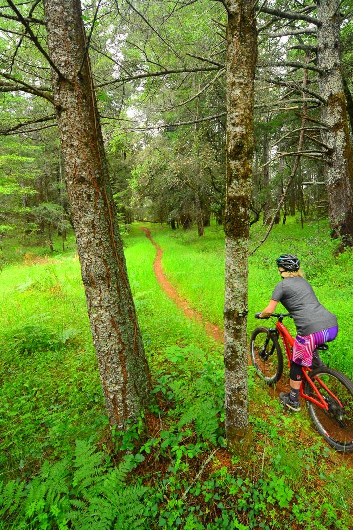 Annadel Mountain Biking Hero Dirt singletrack