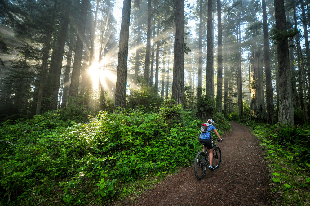 Climb among Redwoods on the Lost Coast