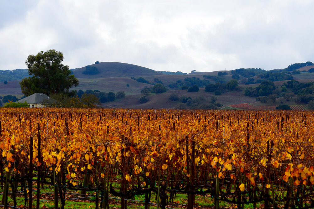 Experience the finer things in Sonoma Wine Country