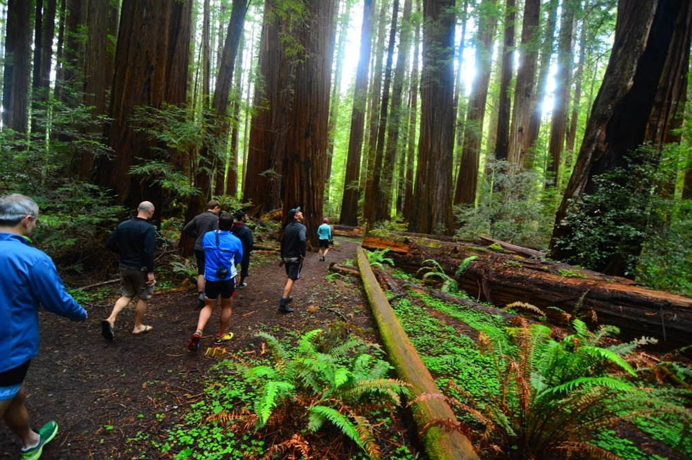 See why the Giant Coastal Redwoods are the most biomass dense place on earth