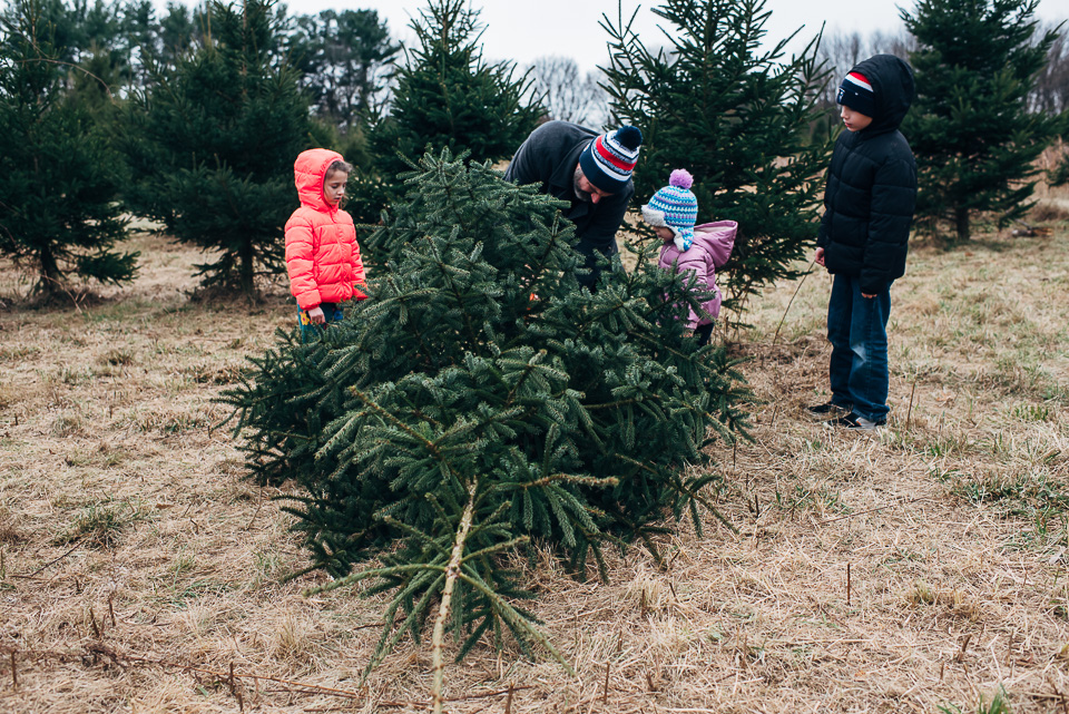Fairfield County Christmas Tree Farm