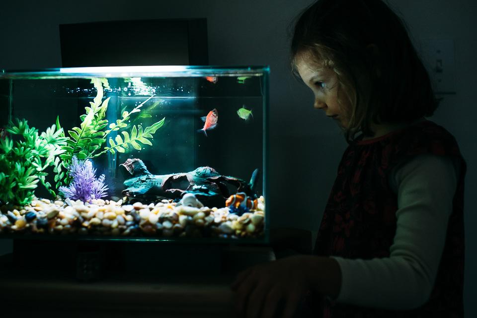 Little girl looking into a fish tank.