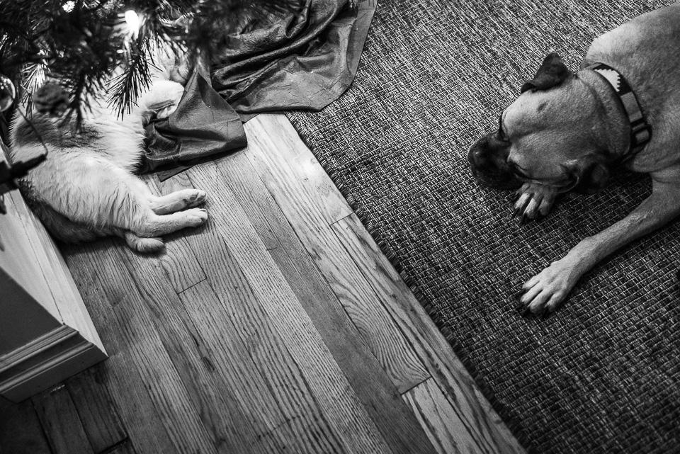 Fairfield County Newborn Photographer Lenna-21.jpg