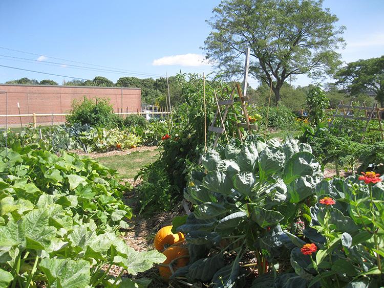 Libbytown Community Garden - Portland, Maine