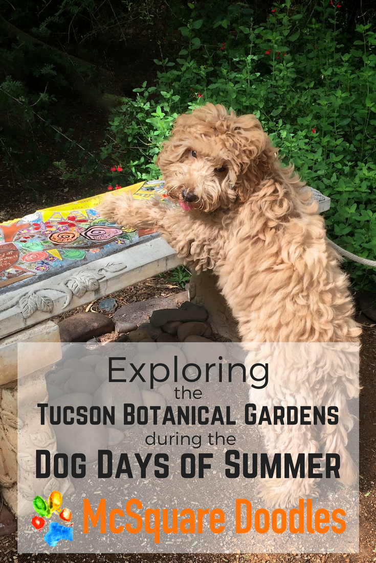 Exploring the Tucson Botanical Gardens During the Dog Days of Summer.