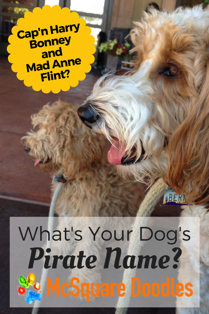 International Talk Like a Pirate Day is September 19! What's your dog's pirate name?