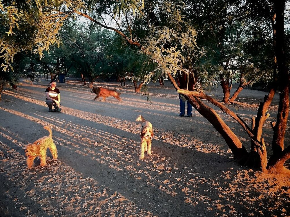 Bernie and Lizzie McSquare explore Smiling Dog Ranch as the sun sets.