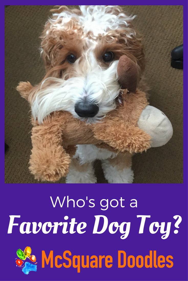 Who's got a favorite dog toy? Find a diverse selection of dog toys from plashes to squeaky toys.