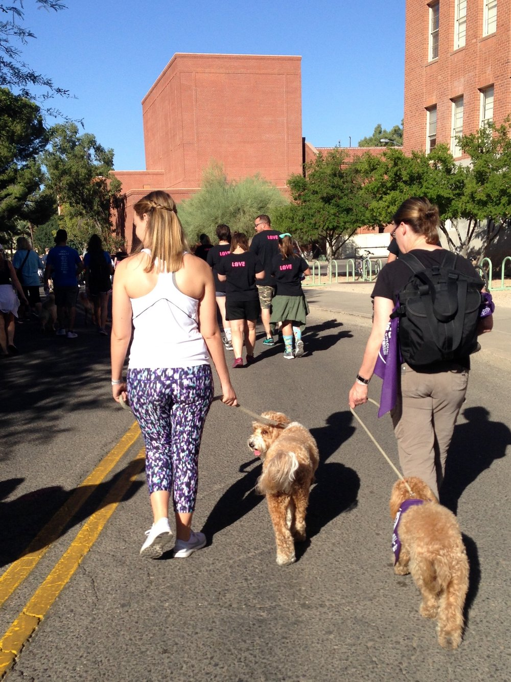 Bernie and Lizzie McSquare walking on the UA Mall during the Southern Arizona's Sweat for Pets 3K Walk.