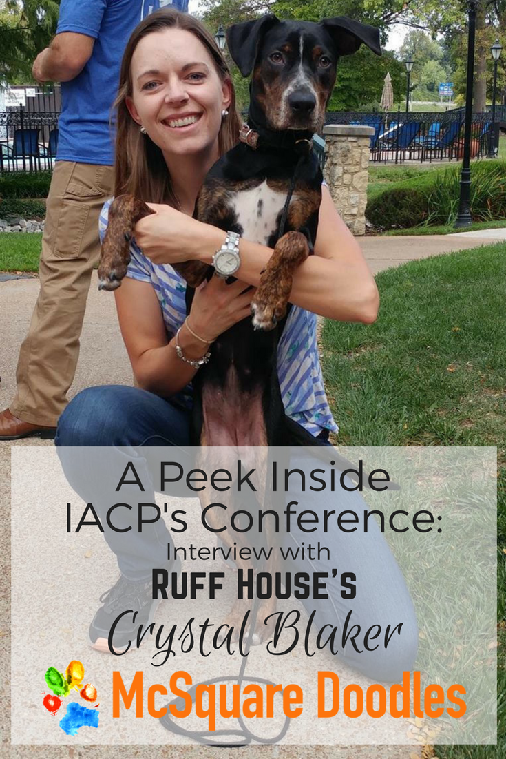 Daisy, a purebred Catahoula Leopard Dog and Crystal Blaker at the IACP Conference 2017