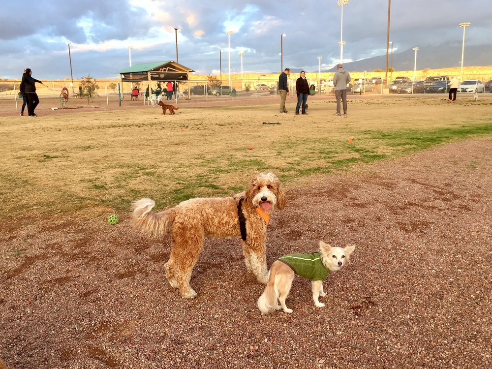 Bernie likes the new kid at the dog park.
