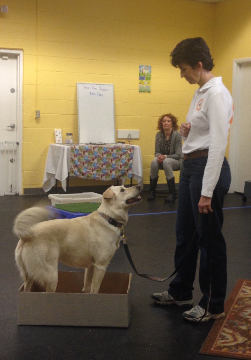 Kota focuses on trainer Cindy Morgan during a shaping demonstration at A Loyal Companion's 3rd annual Open House.