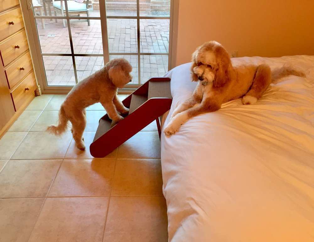 Lizzie McSquare learns to use her Solvit PupSTEP while Bernie contemplates his new reality.