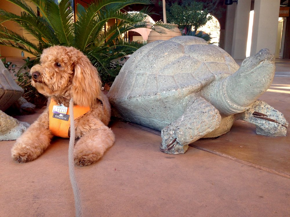 Inspired by the stone tortoises at LaEncantada, Lizzie comes out of her shell.