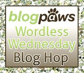 Blog paws Wordless Wednesday Blog Hop IMage