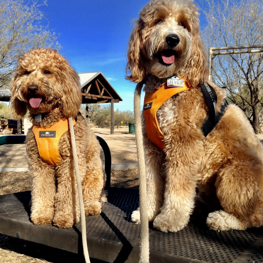 Lizzie and Bernie McSquare happily jump onto numerous platforms around Brandi Fenton Park on the Rillito River Park Path.