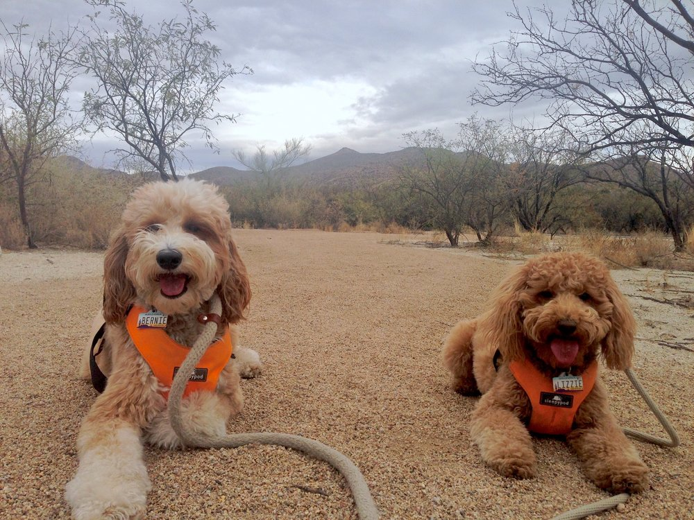 Bernie and Lizzie McSquare resting at Agua Client Park in Tucson, Arizona.