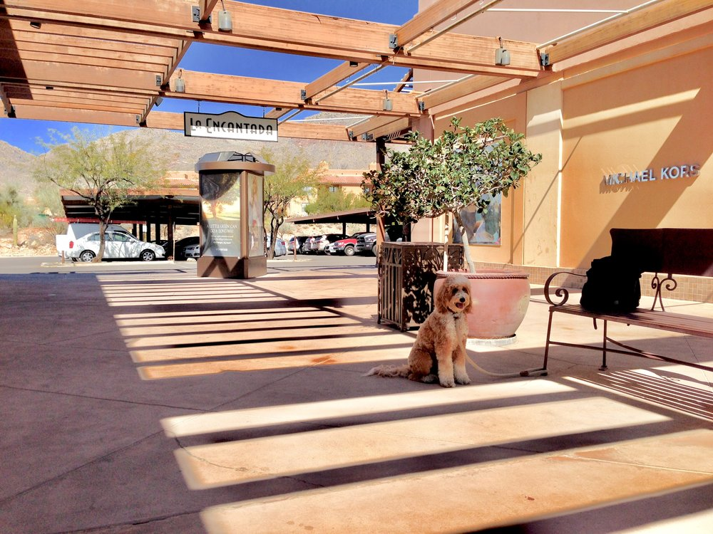 The upper level of La Encantada has these more isolated nooks where Bernie can practice his sit-stay. People walk back and forth to the parking lot in smaller packs so this location is another great place to practice warming up our skills.