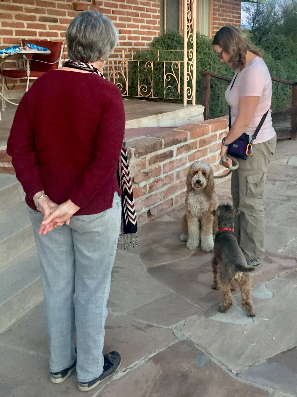 Bernie McSquare finds the other dog's proximity to him a bit distracting while my friend and I try practicing our meeting for the Canine Good Citizen test.