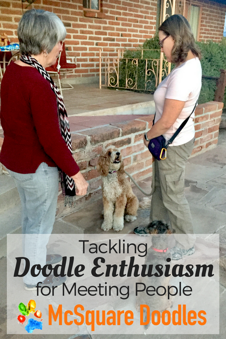 """Bernie McSquare's high level of engagement with me enabled him to ignore another dog as we practiced """"Accepting a Friendly Stranger"""" for the AKC's Canine Good Citizen test."""
