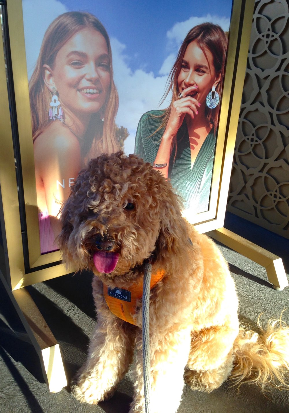 Labradoodle Lizzie McSquare sits in front of a shop sign featuring two young models at La Encantada Shopping Center.