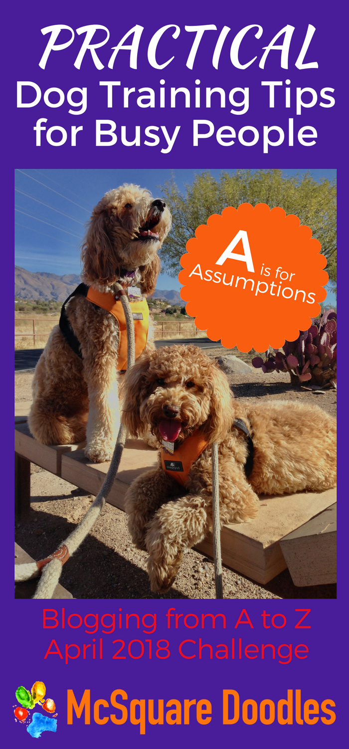#AtoZChallenge - A is for Assumptions - Practical Dog Training Tips for Busy People on McSquare Doodles