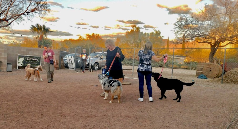 Bernie McSquare practices his loose-leash walking skills during our Canine Good Citizen class. See that black dog on the right? That's Lola. She rocked not only her CGC test, but also her Community Canine (CGCA) test! Photo Courtesy of Crystal Blaker, Ruff House Dog Training & Behavior Modification.