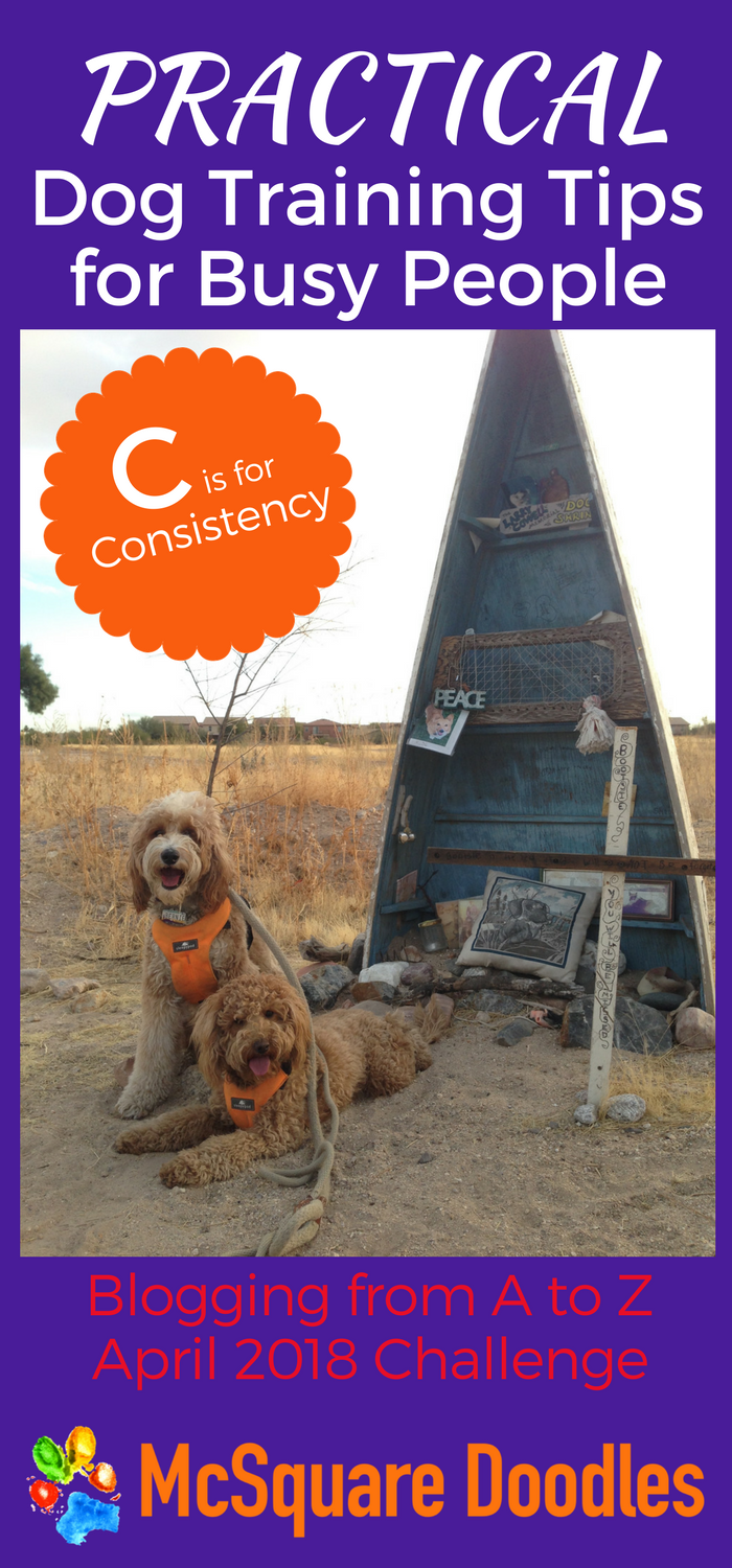 #AtoZChallenge - C  is for Consistency - Practical Dog Training Tips for Busy People on McSquare Doodles