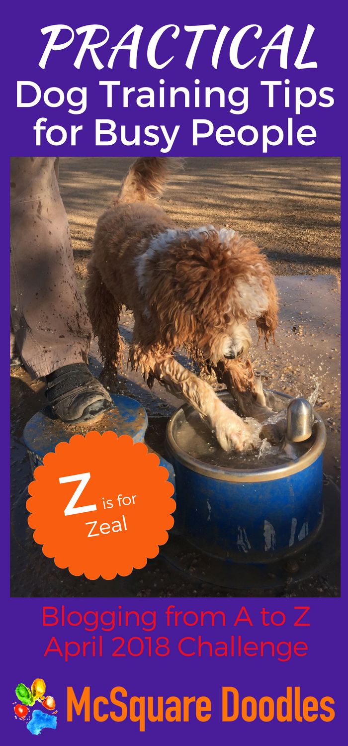 #AtoZChallenge - Z  is for Zeal - Practical Dog Training Tips for Busy People on McSquare Doodles