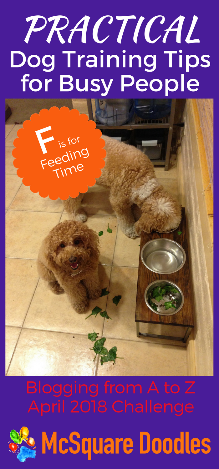 #AtoZChallenge - F  is for Feeding Time - Practical Dog Training Tips for Busy People on McSquare Doodles