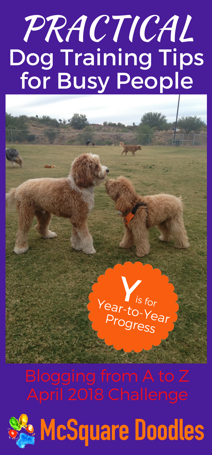 #AtoZChallenge - Y is for Year-to-Year Progress - Practical Dog Training Tips for Busy People on McSquare Doodles